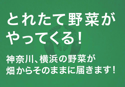 心のこもったお野菜をご家庭へお届けいたします。地元横浜で採れた新鮮野菜を是非お楽しみください。